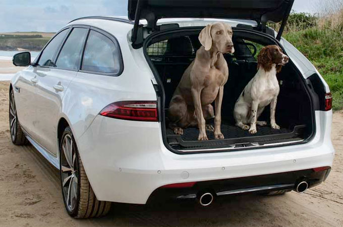 Two Dogs Sat In The Loadspace Of A White Jaguar