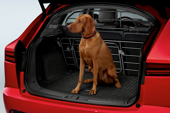 Image of Jaguar E-Pace with Dog in the loadspace.