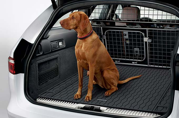 A dog in the back of a Jaguar XF Sportbrake with the optional petpack.