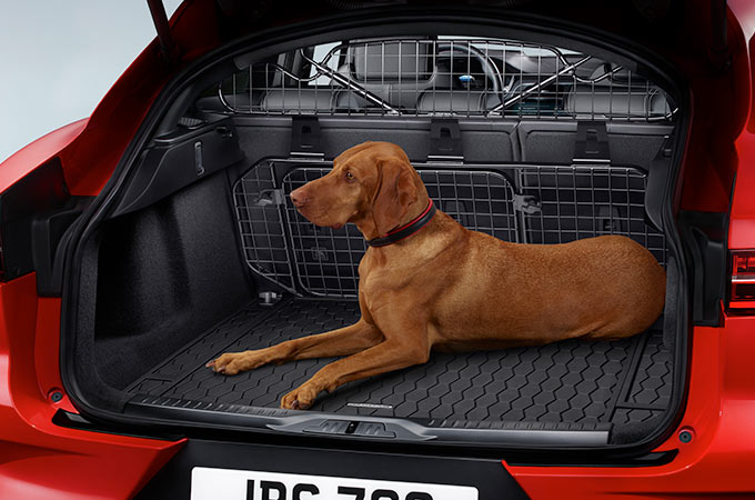 Red Jaguar I-Pace With A Dog In The Loadspace.