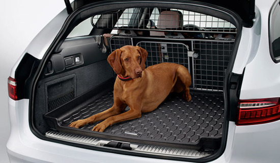 A dog in an F-pace with the optional Pet pack
