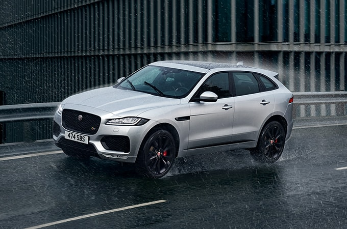 Grey Jaguar in rain