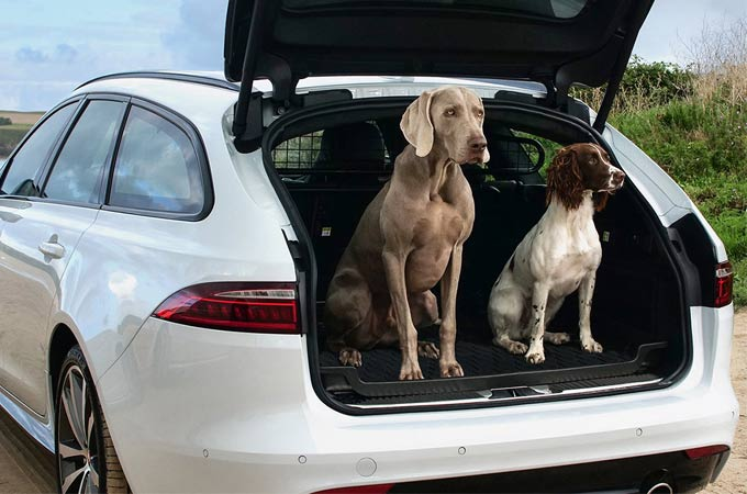 Two Dogs Sat In The Loadspace Of A White Jaguar.