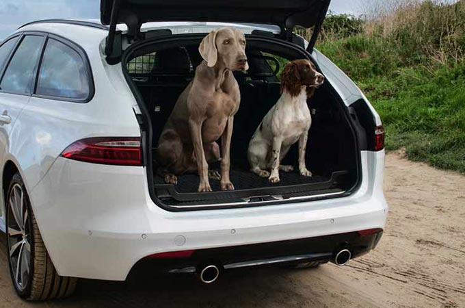 Two Dogs Sat In Loadspace Of A White Jaguar.